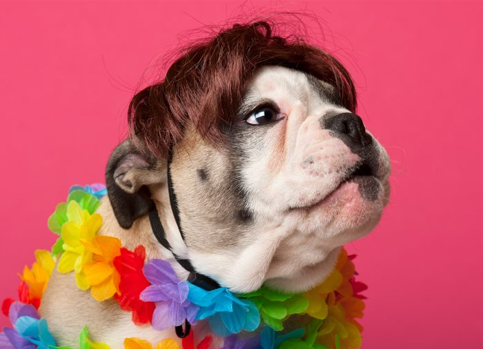 Best Shampoo for English Bulldog Puppy